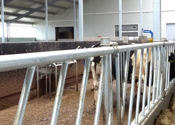 Podłogi rusztowe dla bydła